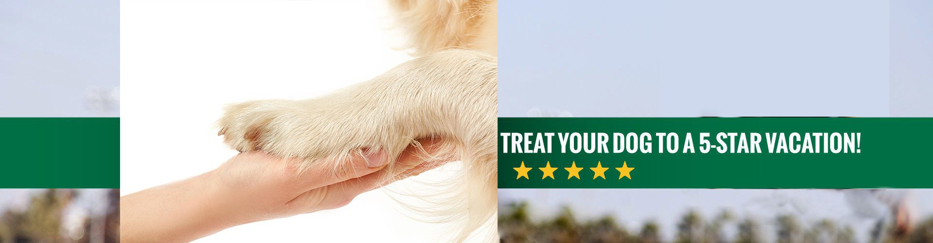 Treat your dog to a 5 star vacation